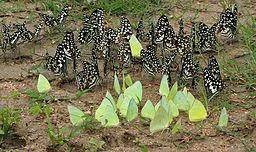 introvert-social-butterflies
