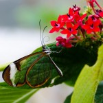introvert-social-butterfly